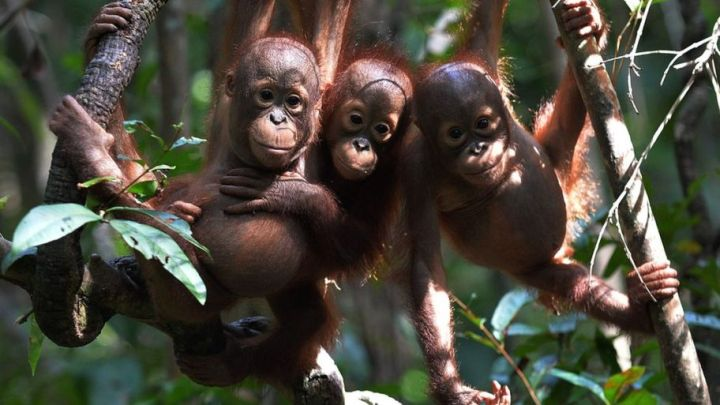 Thoughts on Palm Oil